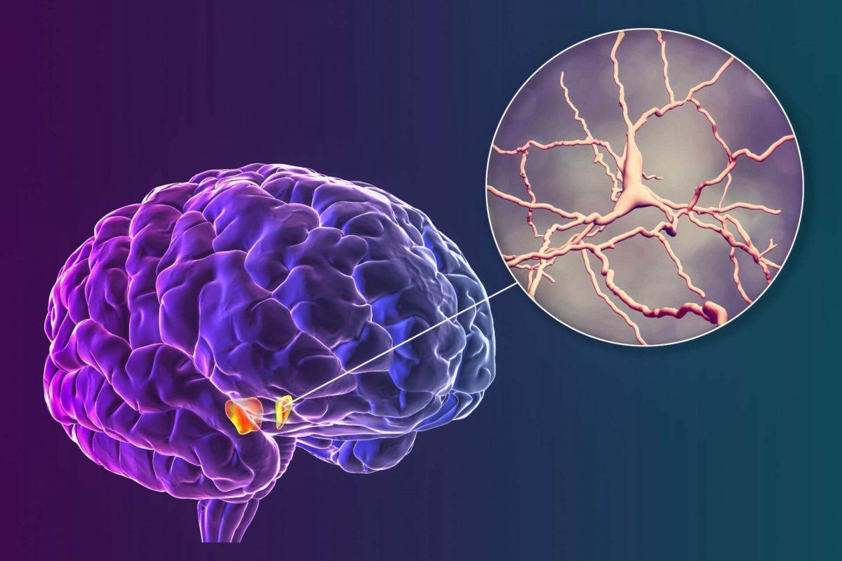 Neurological development disorders