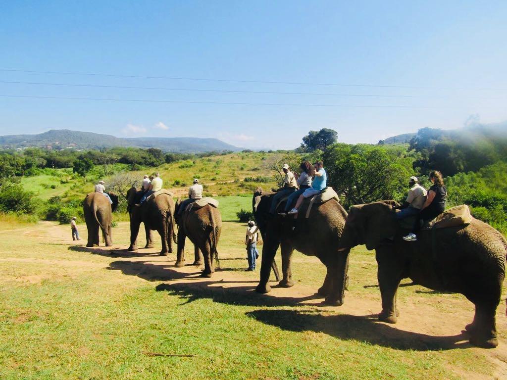 Excursion on elephants